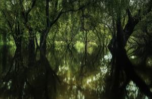 The swollen Hawkesbury River at Yarramundi.